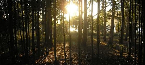 mar-del-plata-barrios-reservas-forestales