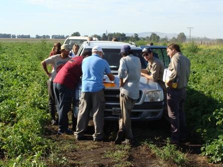 RENATEA detectó graves irregularidades en la cosecha de la papa en Tandil