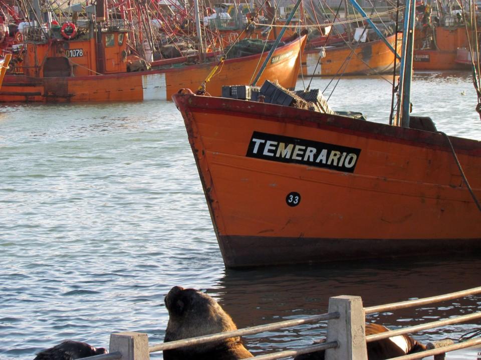 costero_temerario-960x700