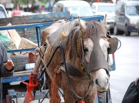 Flores: Cartonero asesina de 18 balazos a su caballo