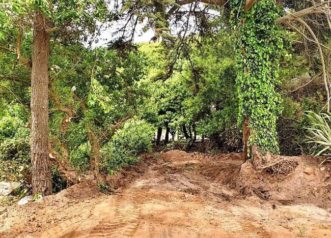 Denuncian penalmente al concesionario del balneario Horizonte por tala ilegal en reserva forestal