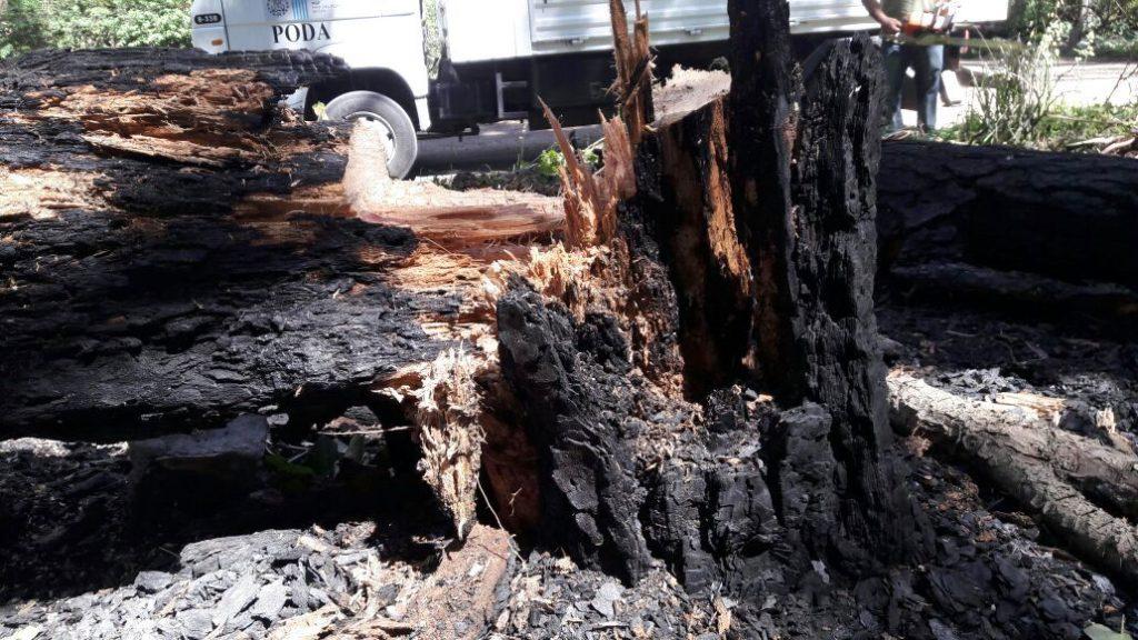 fotos-mgp-incendio-en-el-bosque-de-peralta-ramos