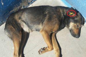 """Animales callejeros: aseguran que la """"caravana"""" está contraindicada en perros y gatos"""