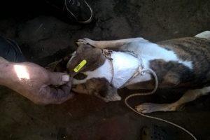 Solicitan informes por controvertido dispositivo para perros callejeros