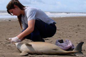 Hallan muertos a cuatro delfines en el partido de la Costa