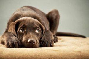 Reducir la frecuencia de los baños y cortes de pelo: cómo cuidar a las mascotas durante el invierno