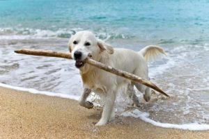 Científicos argentinos hallan la fórmula para retrasar el envejecimiento en perros