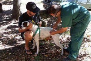 Se vacunaron más de 300 perros y gatos en el marco de la campaña de vacunación anual antirrábica