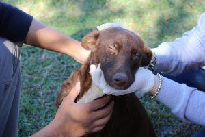 Día del animal: perros que ayudan a los chicos a generar habilidades socioemocionales