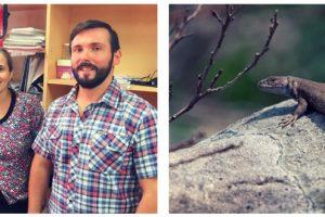 Descubren una nueva especie de lagartija en la sierras de Tandilia