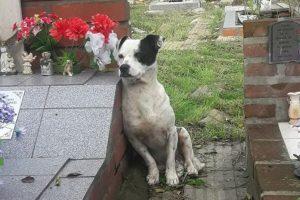 La historia detrás de la foto del perro que no se separa de la tumba de su dueño