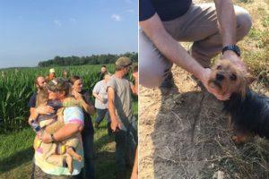 Una nena se perdió en un maizal y sobrevivió en compañía de su perro