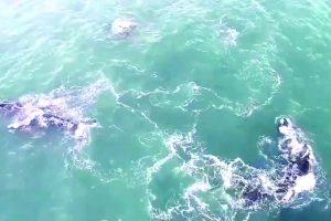 Un grupo de ballenas llamó la atención a turistas y vecinos en Mar del Plata