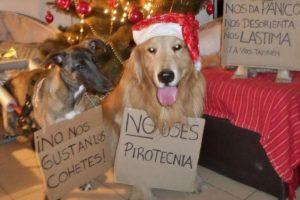 ¿Cómo evitar el efecto pirotecnia y cuidar a nuestras mascotas en las fiestas?