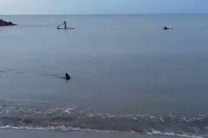 ¡Que susto! Un tiburón apareció en la orilla de Santa Clara