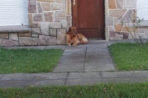 Se mudaron a Corrientes y abandonaron al perro en su casa de Mar del Plata sin agua ni comida