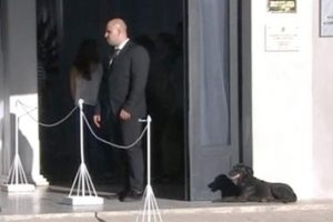 Nala, la perra de Emiliano Sala, estuvo durante horas en la puerta del velatorio