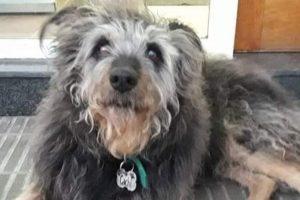 Emotivo adiós: Murió Cachi, el perro callejero más querido de Bahía Blanca, y los vecinos se congregaron para despedirlo
