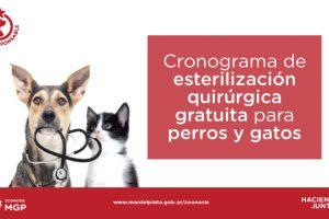 Durante todo marzo:Cronograma de esterilización quirúrgica de mascotas en los barrios