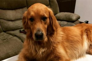 Mascotas donantes: Conocé el banco de sangre para animales que creó un marplatense