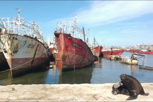 Recuperarán 120 metros de frente de amarre con el desguace de más de 20 buques inactivos