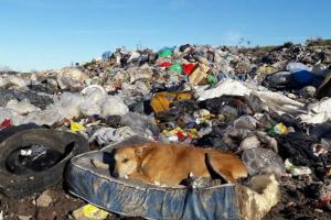 La superpoblación canina sigue siendo un problema no resuelto por inoperancia del Municipio