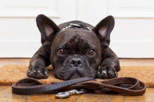 Maltrato animal: multarán a quienes abandonen sus mascotas, las dejen encerradas o les tiñan el pelo