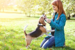 Un estudio revela que los perros detectan el cáncer de pulmón con un 97% de precisión