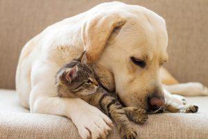 Naranja ofrece un servicio para mascotas que brinda atención veterinaria de urgencia, vacunación, alimentos y guarderías.