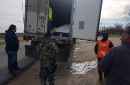 Secuestraron 24 mil kilos de pescado fresco a dos camiones que se dirigían a Mar del Plata
