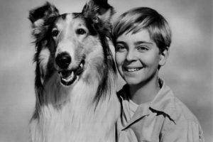 Los 5 perros más famosos de la historia y cómo se robaron nuestros corazones
