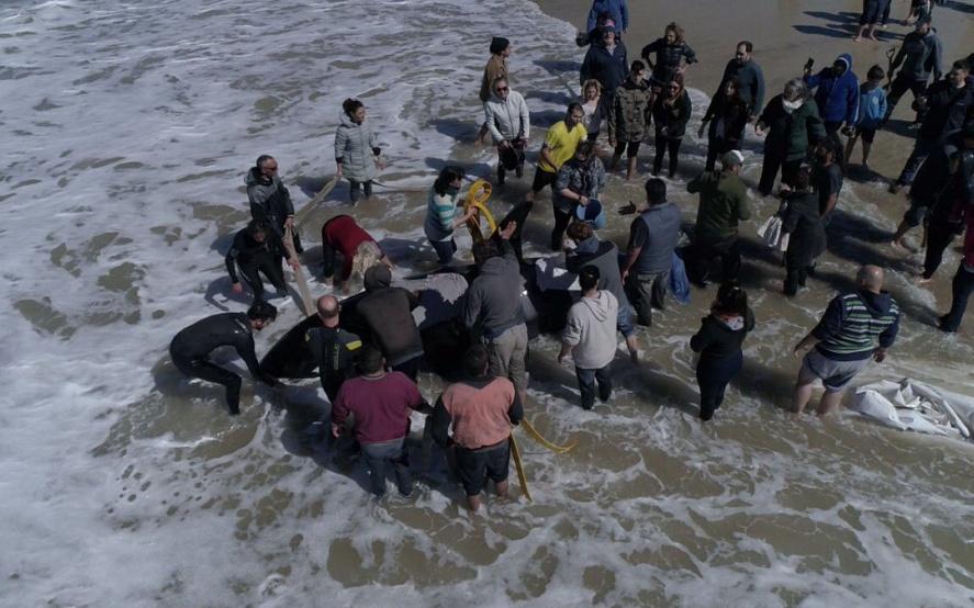 Conmovedor relato de una mujer que participó del rescate de las orcas en La Caleta