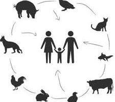 ¿Qué es una zoonosis?