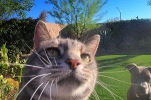 Manny, el increíble gato influencer que se saca selfies y la rompe en las redes