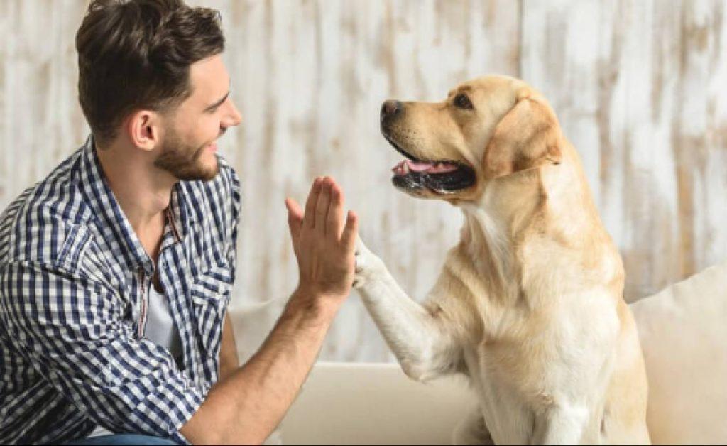 La emotiva reacción de una perra en el funeral de su dueño