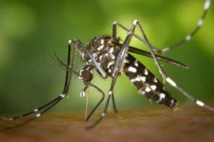 Dengue y sarampión, relegados por el coronavirus