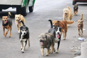 Pese a que no hay evidencia de contagio en animales, veterinarios de la Provincia elaboraron una guía de prevención