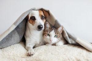El coronavirus y los animales de compañía: los gatos y los perros ¿pueden contagiarse?