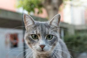 Mascotas en cuarentena: Cómo actuar ante el estres y la ansiedad de nuestros gatos.