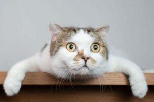 Gatos en cuarentena: cómo identificar problemas de ansiedad y estrés.