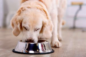 Coronavirus: advierten por la mala alimentación de las mascotas durante la cuarentena