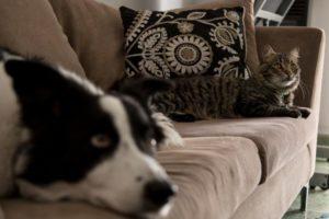 Qué hacer con tu mascota si vivís solo y te internan por coronavirus