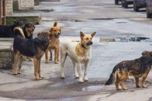 """Avanzarán en la actualización de la ordenanza de """"preservación de la vida animal"""""""