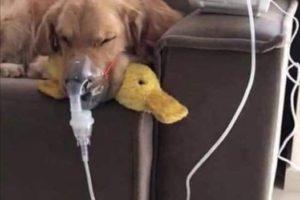La historia del perro que dormía bajo la lluvia y encontró una familia que le brinda todo su amor