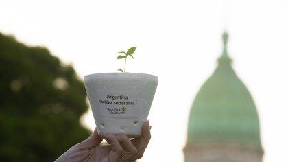 Los puntos centrales de la nueva propuesta de reglamentación de la ley de cannabis