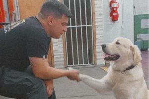 Nació en la calle, un bombero lo adoptó y, por un sentido especial, ahora trabajan juntos