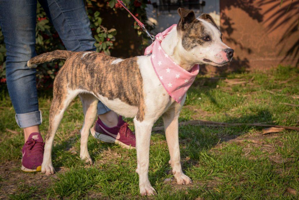 El Municipio lanza una campaña de concientización para la adopción de animales