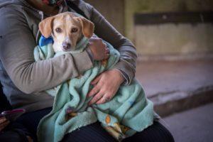 El Municipio establece una nueva sede para las castraciones de animales