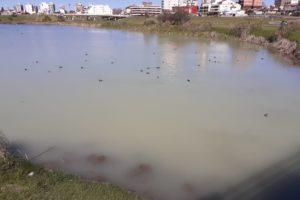 Denuncias por contaminación en las Lagunas de Punta Mogotes