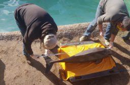 Rescataron un pequeño cetáceo en la zona del Torreón del Monje